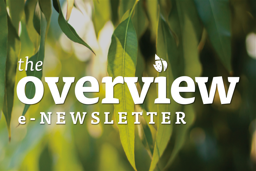 The  Overview <br> e-Newsletter